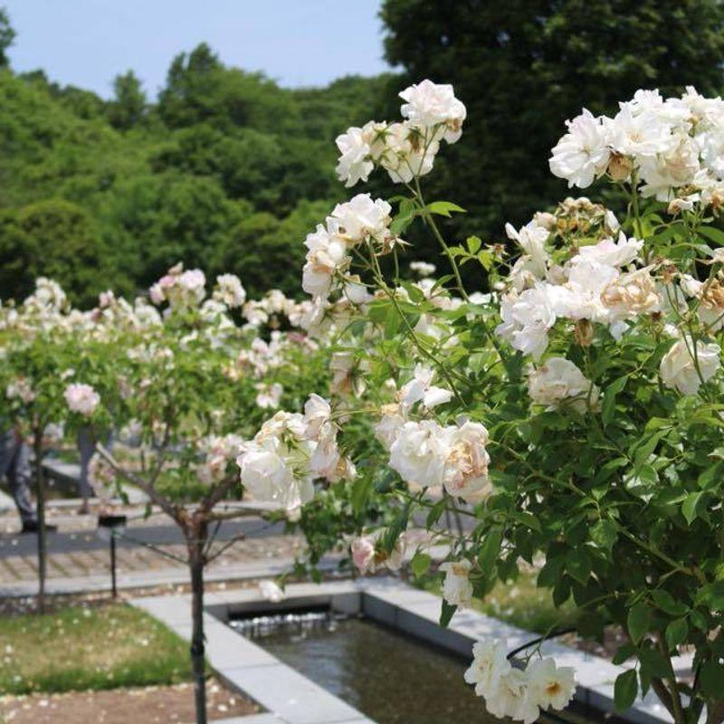 Hana Festa: A Garden in the Countryside photo