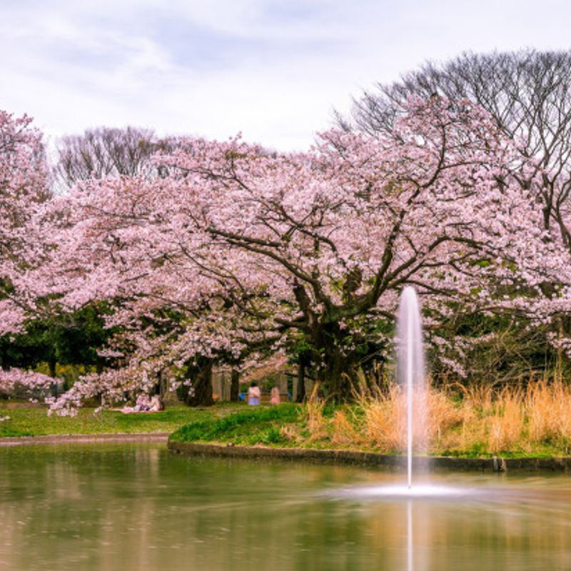Three of my favorite Tokyo area parks for some sunshine! photo