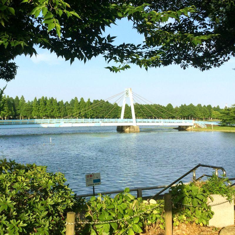 Tokyo's Mizumoto Park, a natural treasure  photo