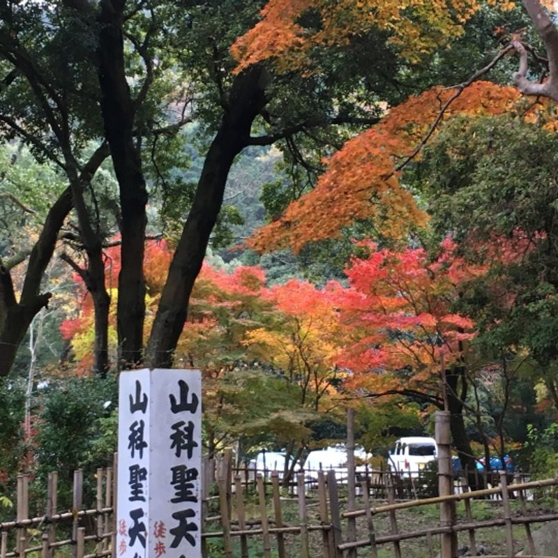 Temple visit for autumn colors photo