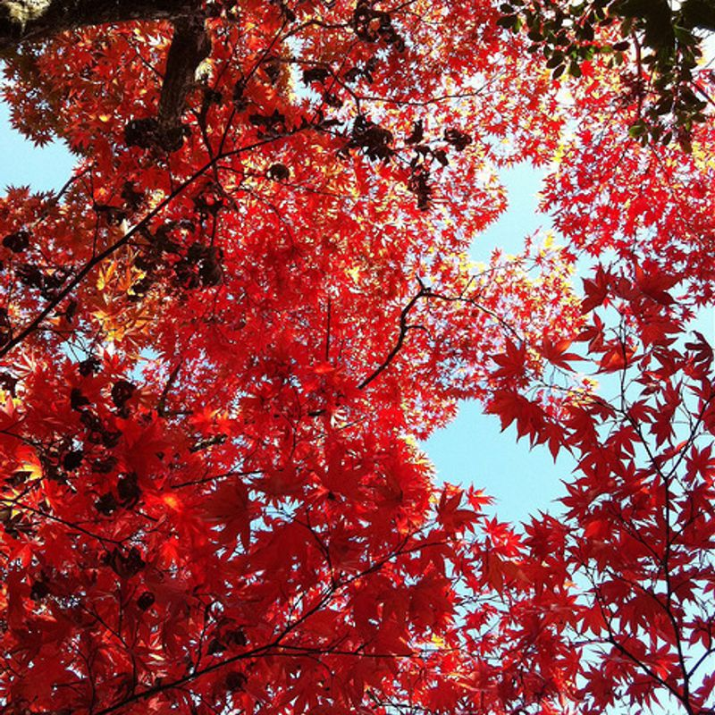 Ten Seasons That You Might Only Know in Japan photo