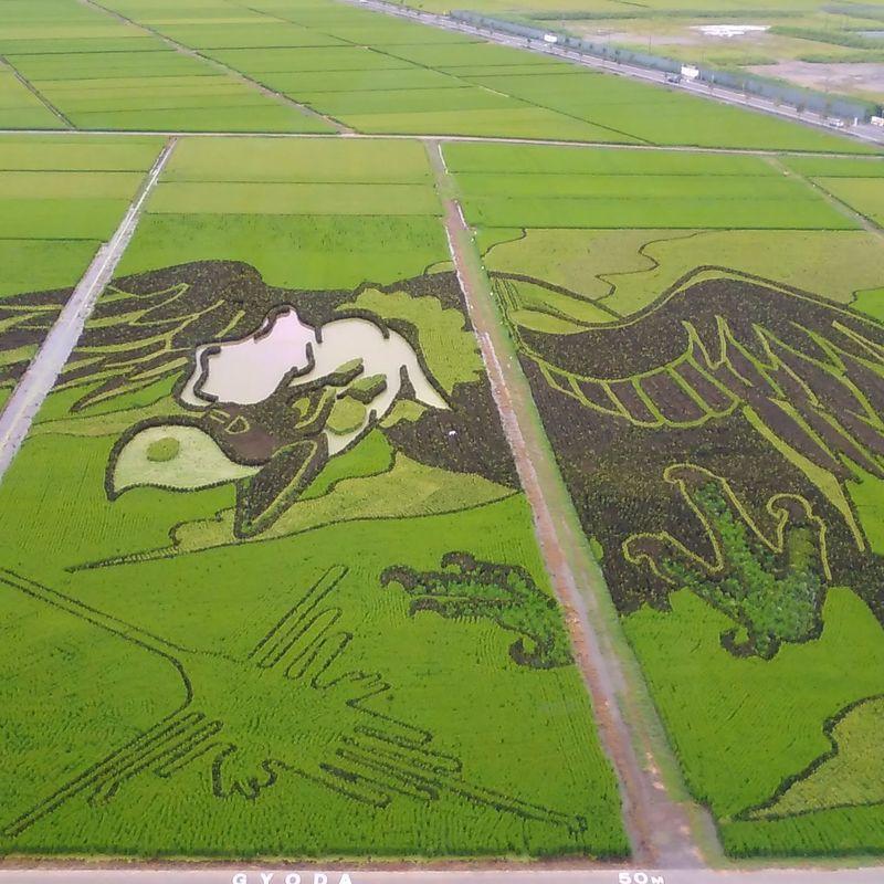 A day trip to see the rice field art of Kodai Hasu No Sato photo
