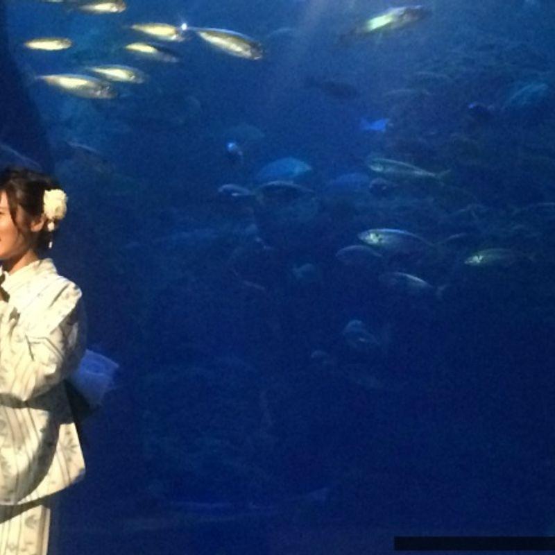 Enoshima Night Wonder Aquarium 2016: Lights, Sound, and Fish photo