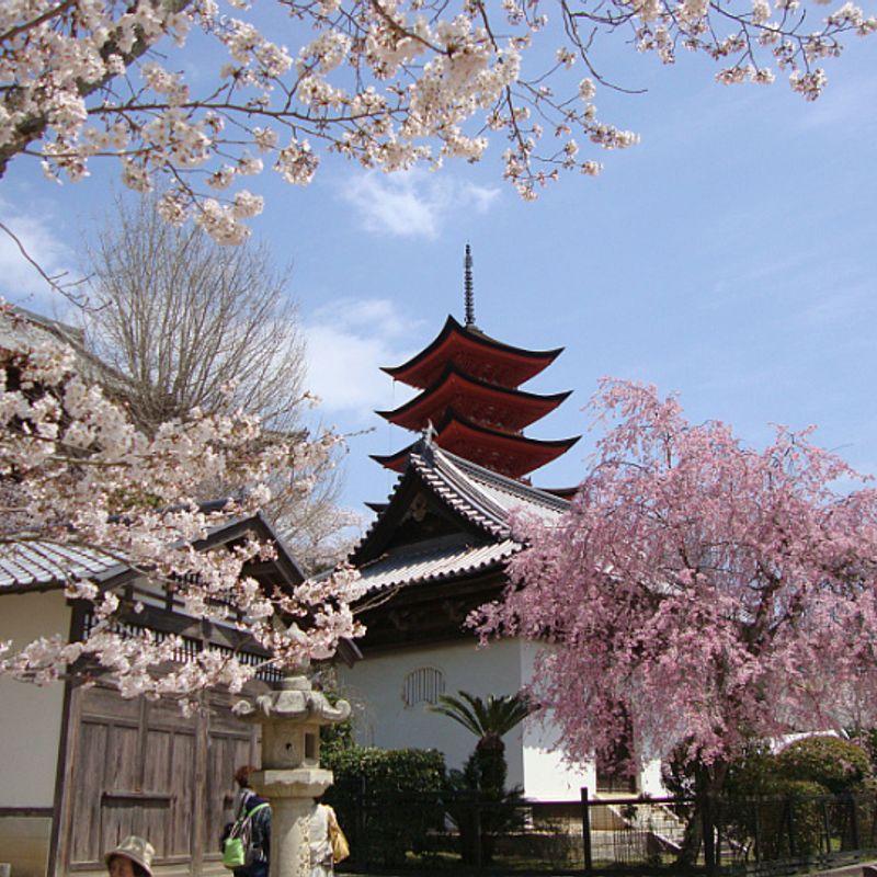 Hanami in Japan 2017: The most popular hanami spots across Japan photo