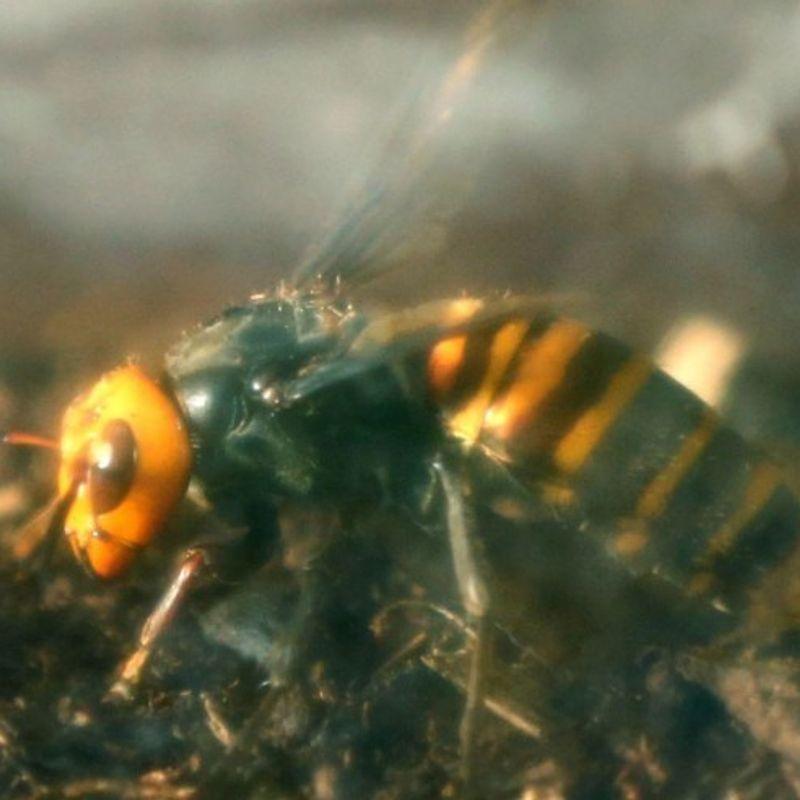 Elderly wheelchair user dies after attack by swarm of hornets photo