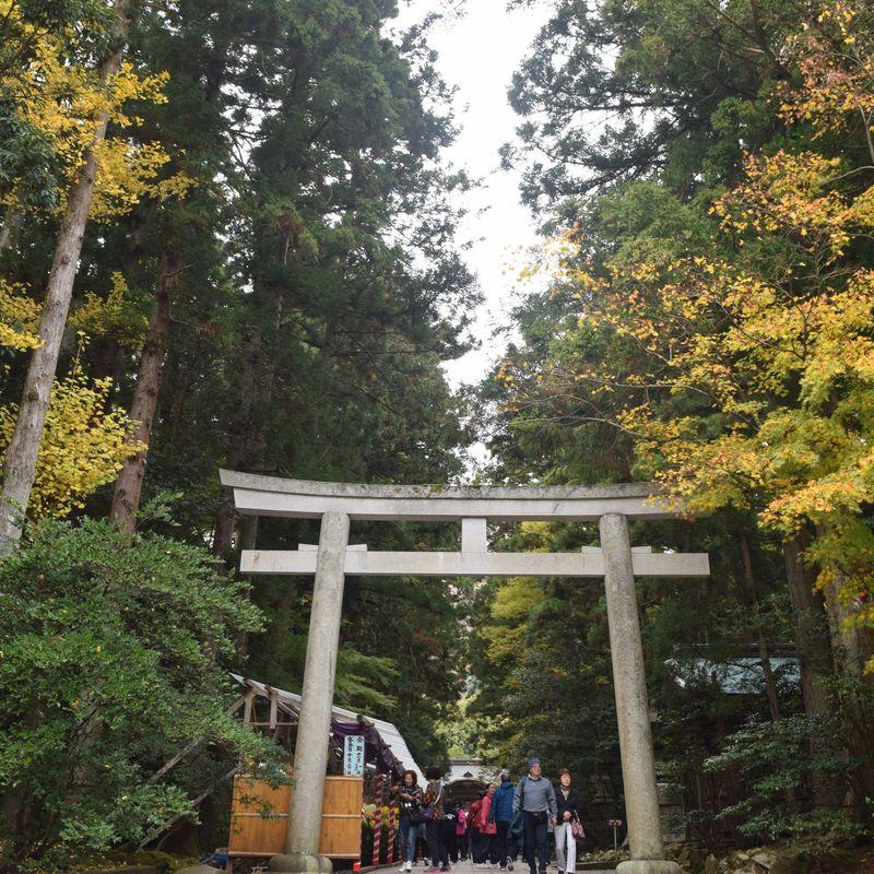 The beauty of Yahiko Shrine photo