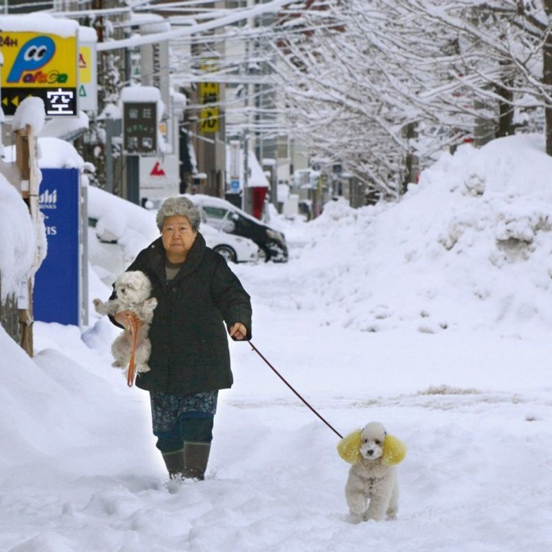 Aging population, costs behind sliding number of pet dogs in Japan photo