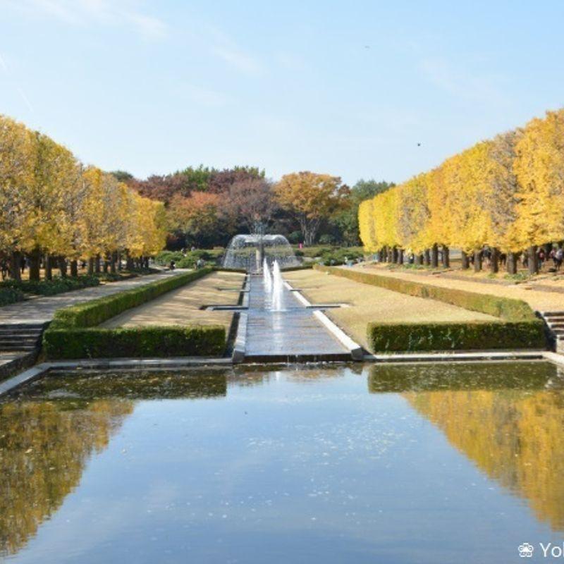 Enjoy Autumn leaves at Showa Kinen Koen photo