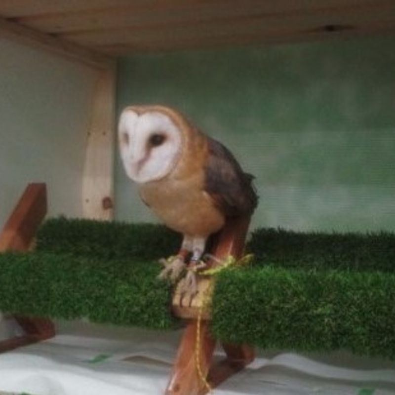 Beat the Heat at Sendai's Owl Cafe This Summer in Japan photo