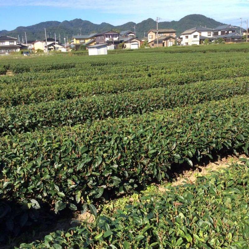 冬の不思議の国に生まれた緑茶?それが可能だ! photo
