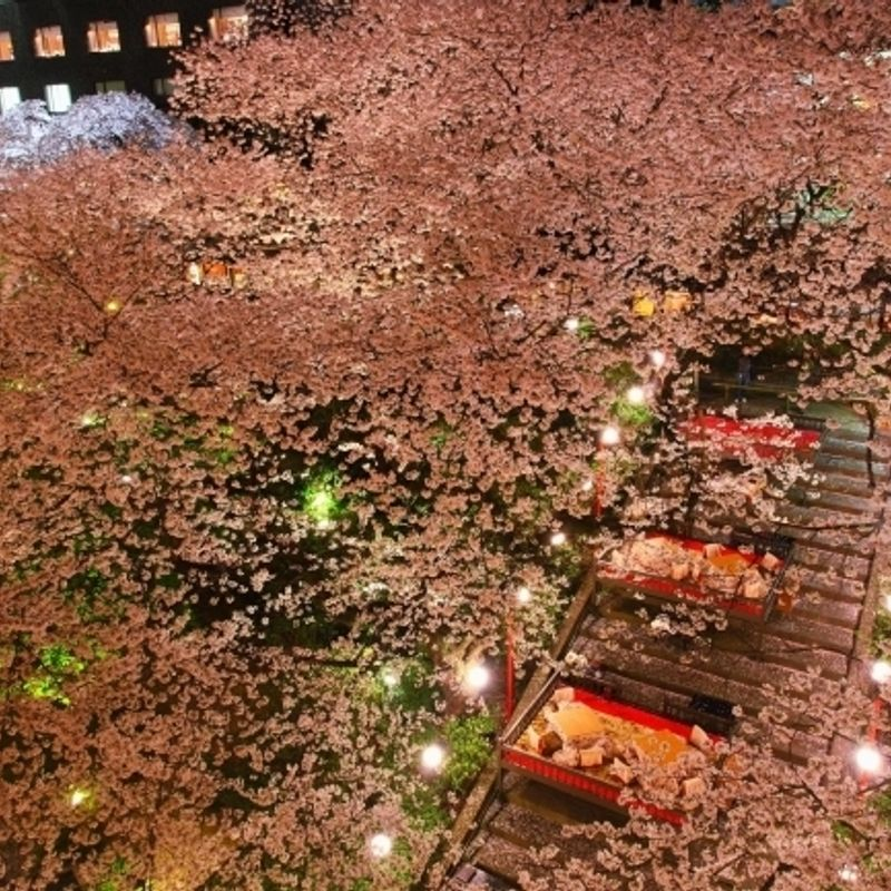 Alternative hanami experiences in Japan: Events to look out for photo