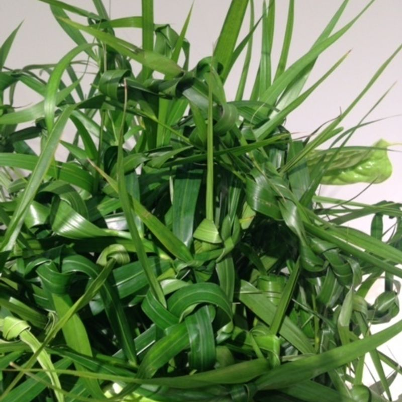 How to enjoy Ikebana exhibitions photo