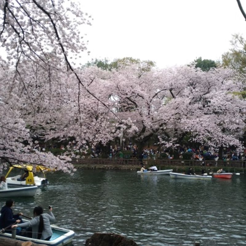 Japan by the Water: The Inokashira Pond photo