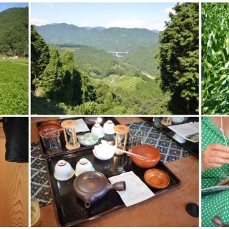 A Gorgeous Day with a lot of Green Tea at Shizuoka photo