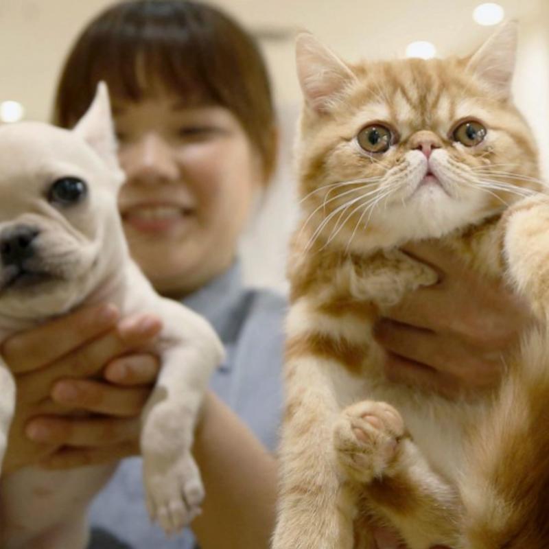 Pet insurance market in Japan expanding due to rising vet bills photo